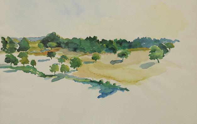 Walnut trees, Dordogne