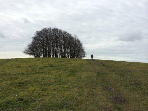 Hilltop trees